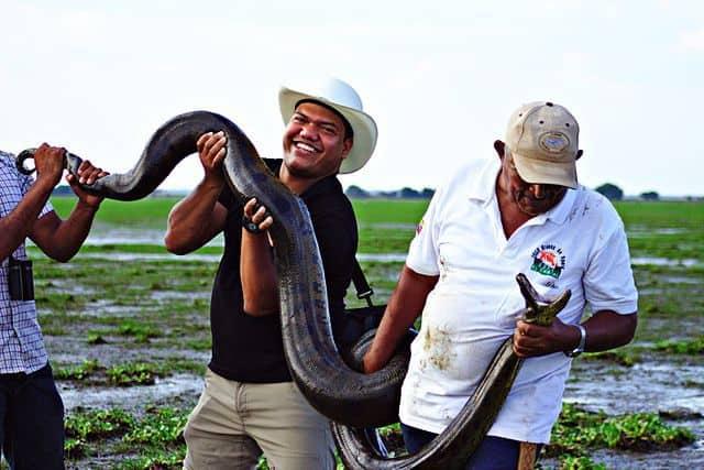 anaconda from venezuela